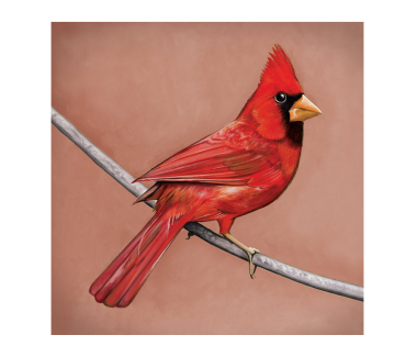 Old Crows / Young Cardinals CD